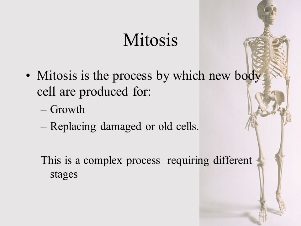 Mitosis Mitosis is the process by which new body cell are produced for: –Growth –Replacing damaged or old cells. This is a complex process requiring d