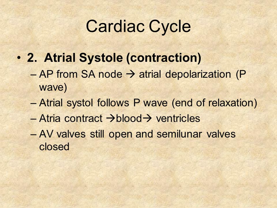 Cardiac Cycle 2. Atrial Systole (contraction) –AP from SA node atrial depolarization (P wave) –Atrial systol follows P wave (end of relaxation) –Atria