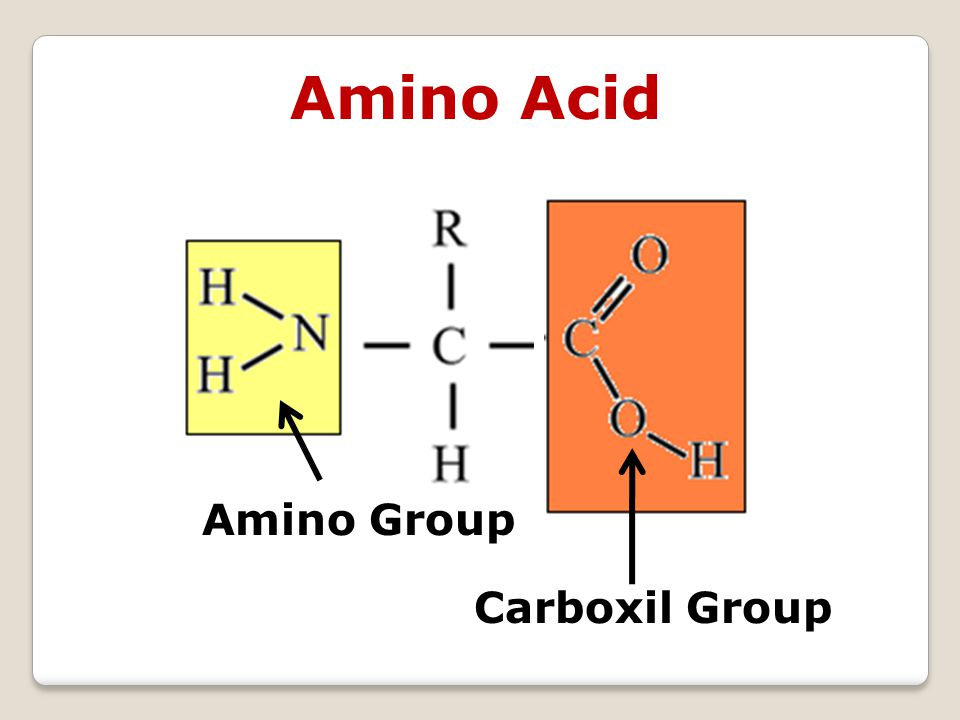 Amino Group Carboxil Group Amino Acid
