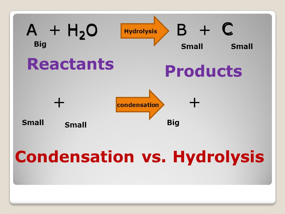 A + H 2 O B + C Reactants Products Big Small H2OH2O B C + A + Big condensation Hydrolysis Condensation vs.