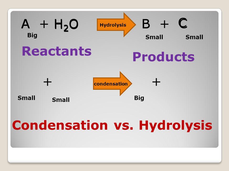 Polysaccharides Examples