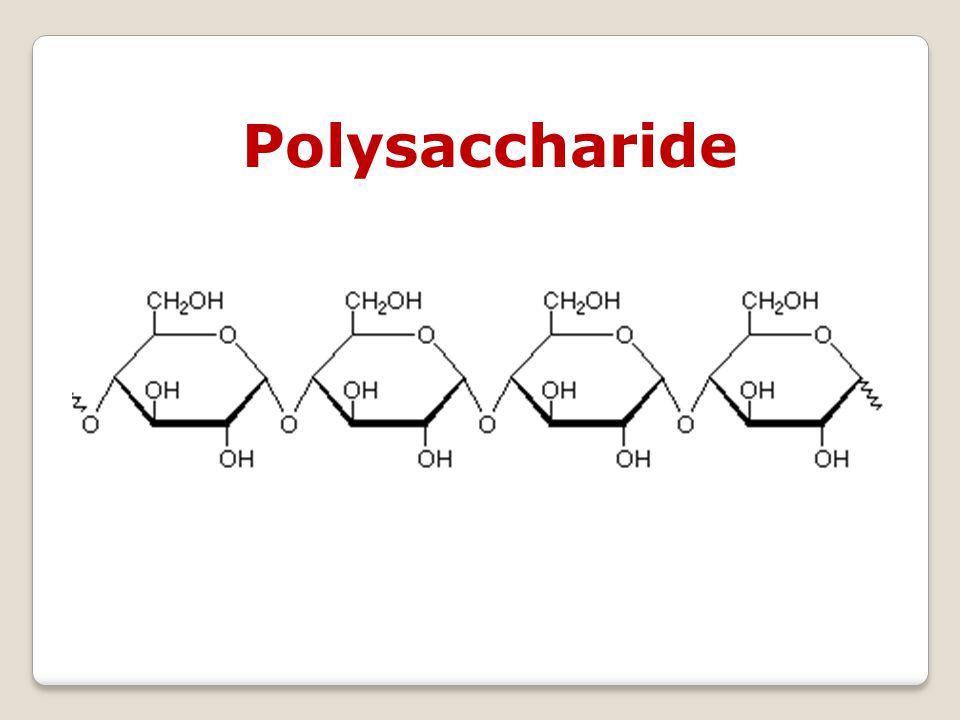 Saccharides Monosaccharides Animation