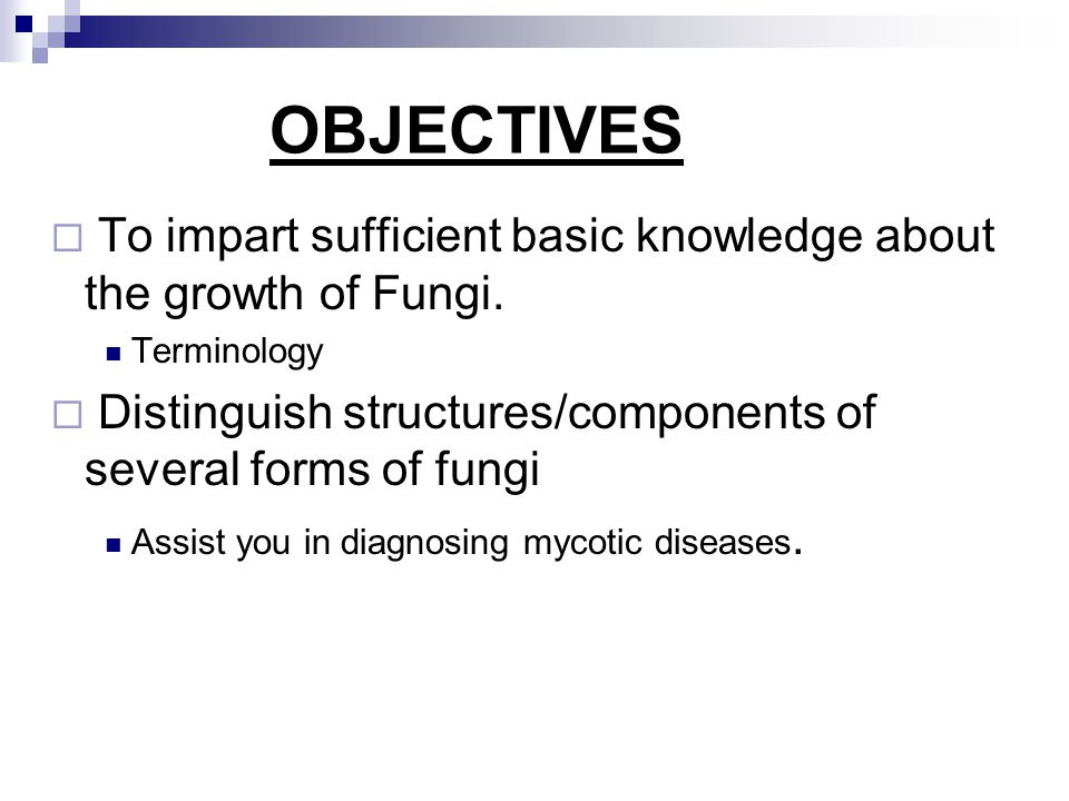 2. Fungal growth