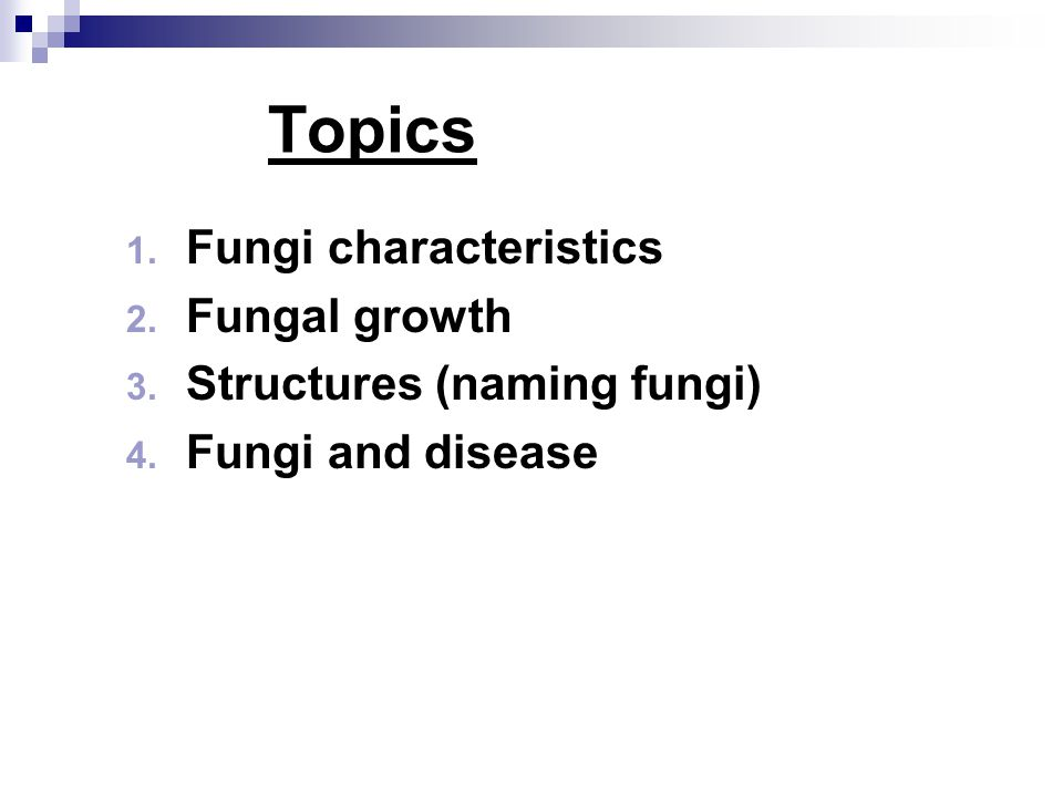 The basic units of growing fungi YeastsHyphae (mold) http://homepages.inf.ed.ac.uk/rbf/HIPR2/libmed.htm