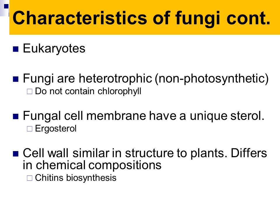 Eukaryotes Fungi are heterotrophic (non-photosynthetic) Do not contain chlorophyll Fungal cell membrane have a unique sterol. Ergosterol Cell wall sim