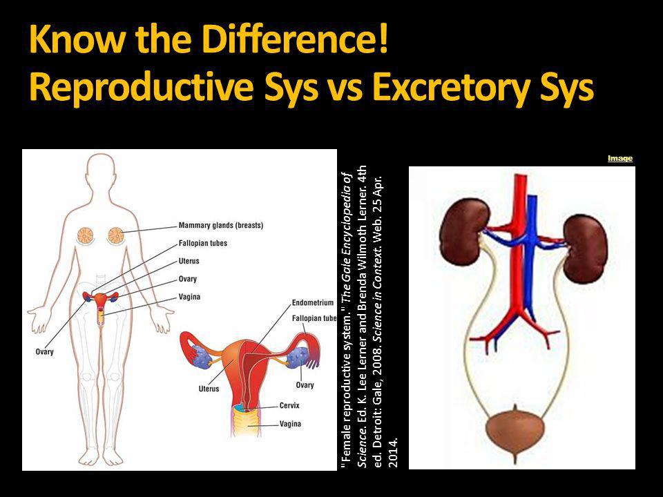 Know the Difference! Reproductive Sys vs Excretory Sys