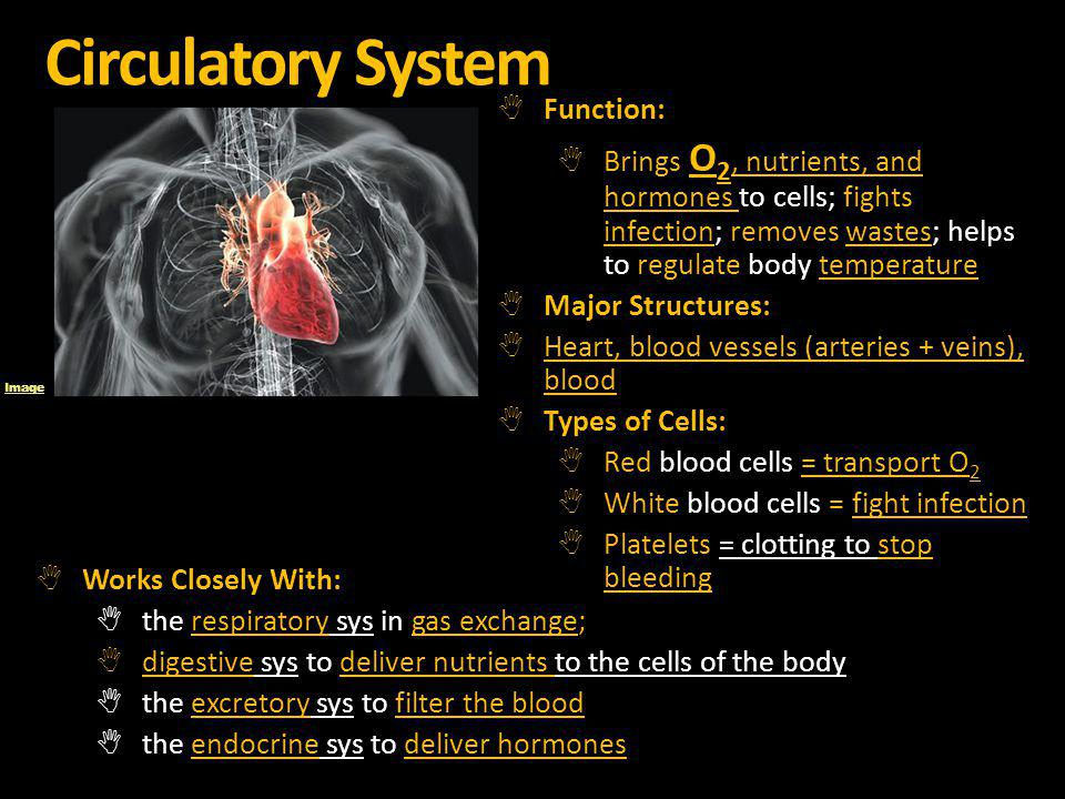 Circulatory System Function: Brings O 2, nutrients, and hormones to cells; fights infection; removes wastes; helps to regulate body temperature Major