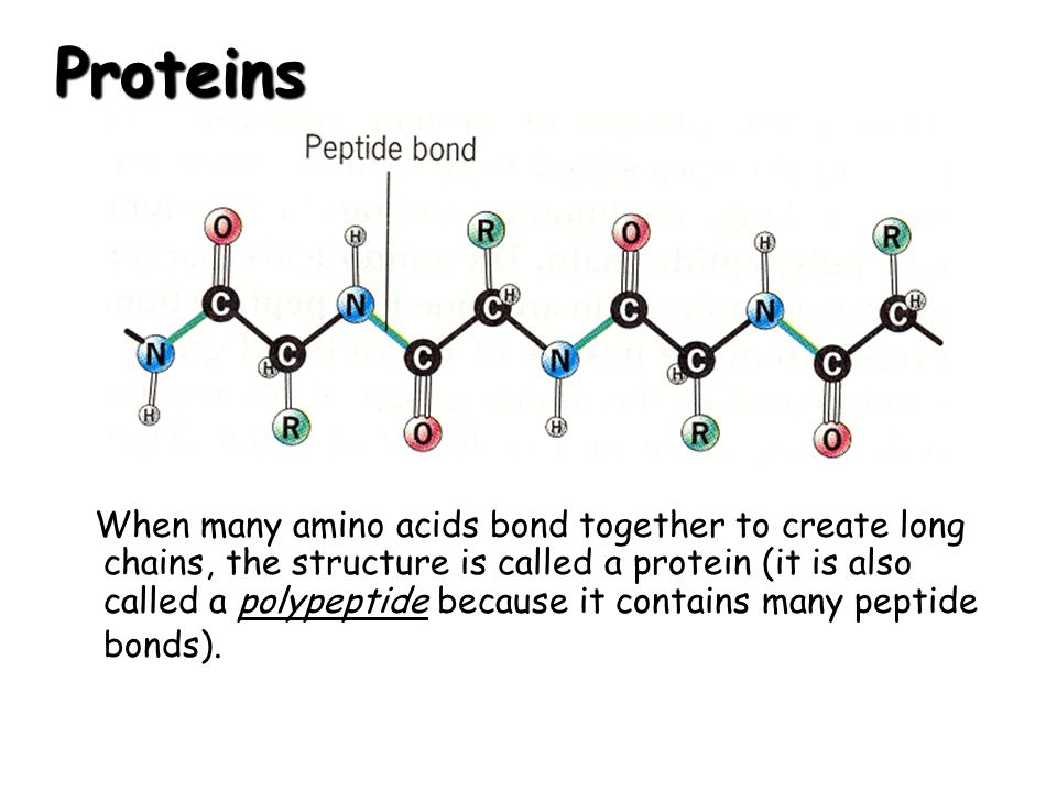 Proteins When many amino acids bond together to create long chains, the structure is called a protein (it is also called a polypeptide because it cont