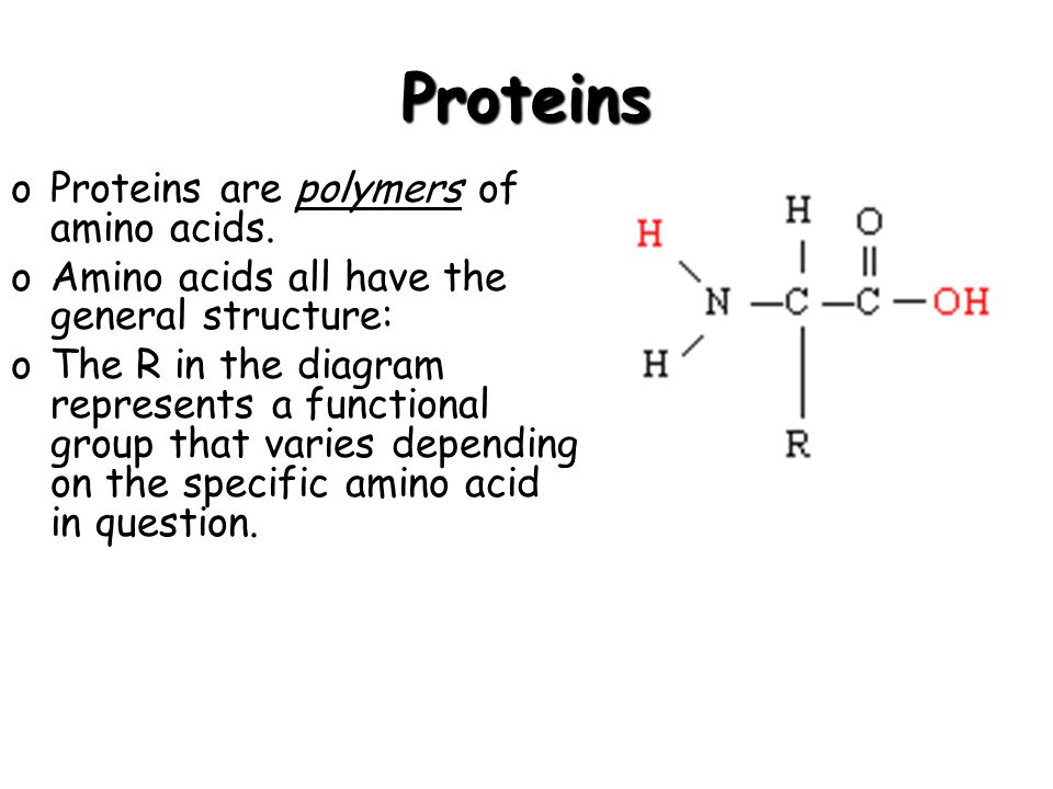 Proteins oProteins are polymers of amino acids.