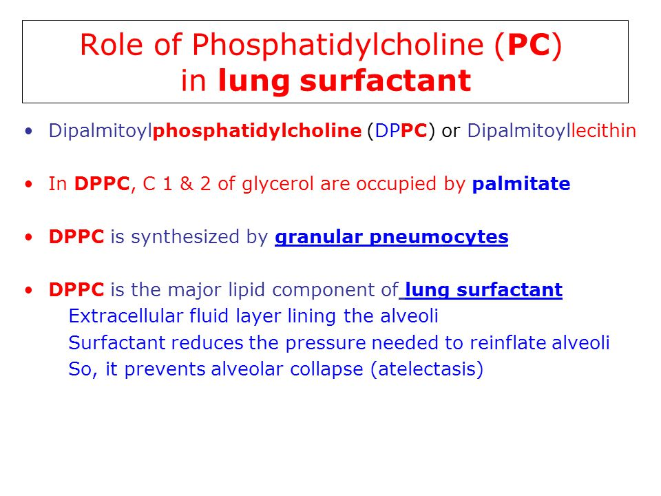 Role of Phosphatidylcholine (PC) in lung surfactant Dipalmitoylphosphatidylcholine (DPPC) or Dipalmitoyllecithin In DPPC, C 1 & 2 of glycerol are occu