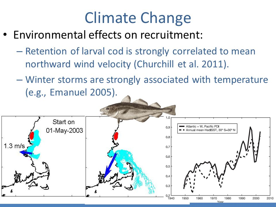 Climate Change Environmental effects on recruitment: – Retention of larval cod is strongly correlated to mean northward wind velocity (Churchill et al.