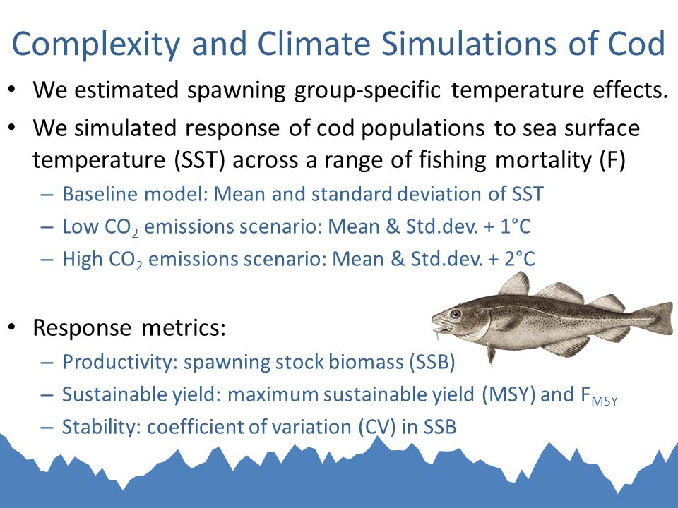 Complexity and Climate Simulations of Cod We estimated spawning group-specific temperature effects.