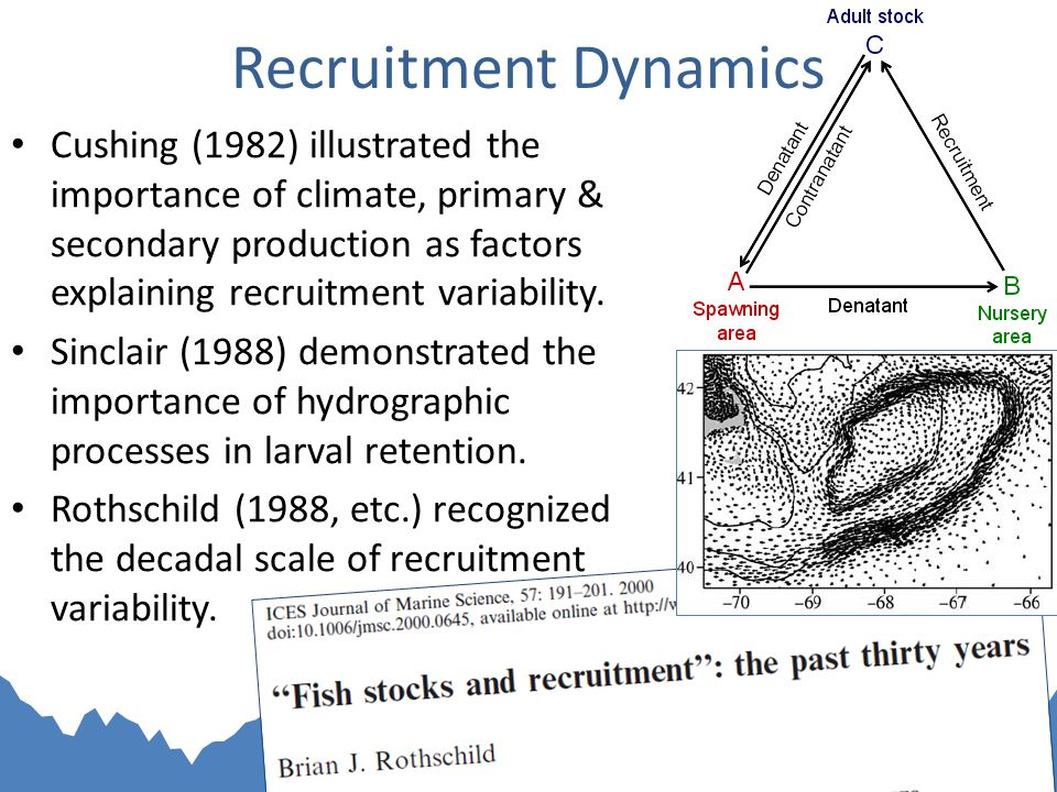 Recruitment Dynamics Cushing (1982) illustrated the importance of climate, primary & secondary production as factors explaining recruitment variability.