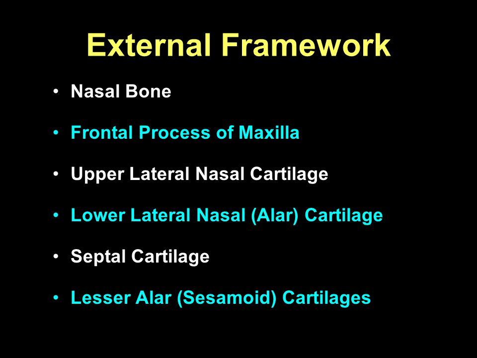 Nasal Bone Frontal Process of Maxilla Upper Lateral Nasal Cartilage Lower Lateral Nasal (Alar) Cartilage Septal Cartilage Lesser Alar (Sesamoid) Carti