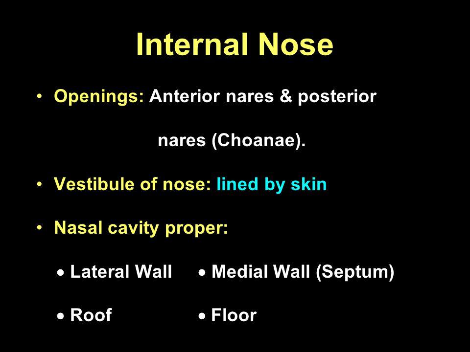 Internal Nose Openings: Anterior nares & posterior nares (Choanae). Vestibule of nose: lined by skin Nasal cavity proper: Lateral Wall Medial Wall (Se