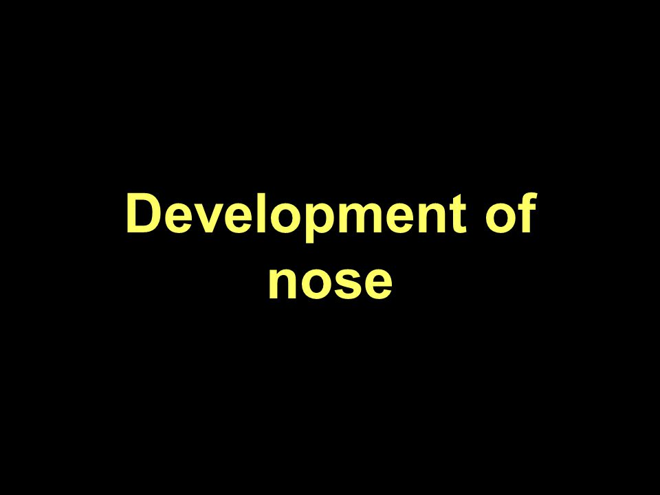Development of nose