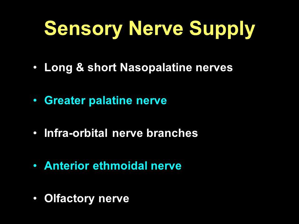 Sensory Nerve Supply Long & short Nasopalatine nerves Greater palatine nerve Infra-orbital nerve branches Anterior ethmoidal nerve Olfactory nerve