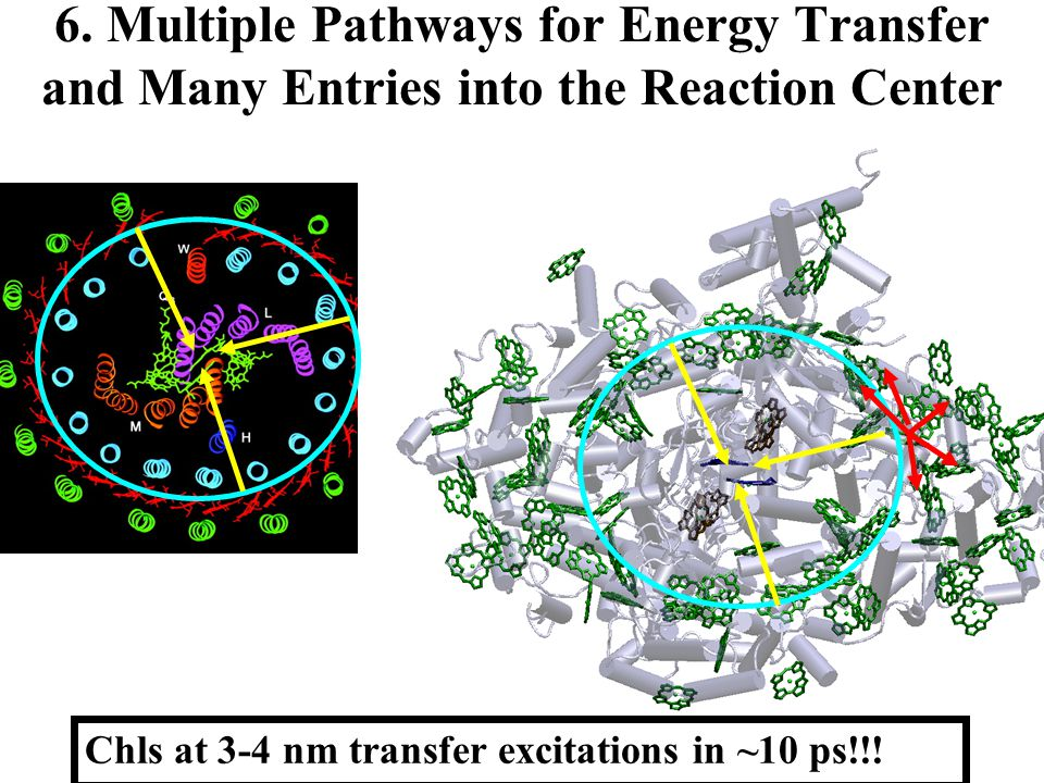 6. Multiple Pathways for Energy Transfer and Many Entries into the Reaction Center Chls at 3-4 nm transfer excitations in ~10 ps!!!
