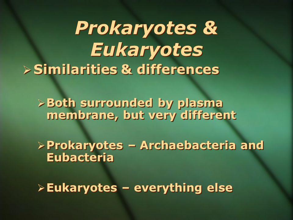 Prokaryotes & Eukaryotes Similarities & differences Both surrounded by plasma membrane, but very different Prokaryotes – Archaebacteria and Eubacteria