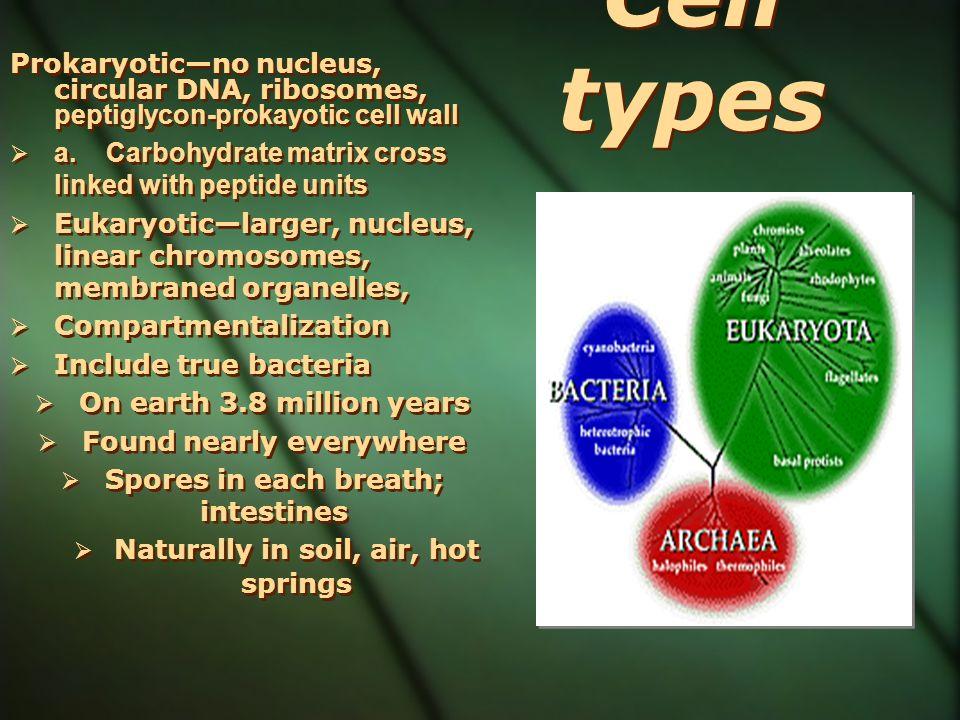 Prokaryoticno nucleus, circular DNA, ribosomes, peptiglycon-prokayotic cell wall a.Carbohydrate matrix cross linked with peptide units Eukaryoticlarge