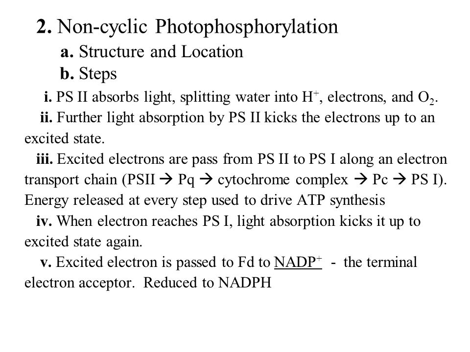 a. Structure and Location 2. Non-cyclic Photophosphorylation b.