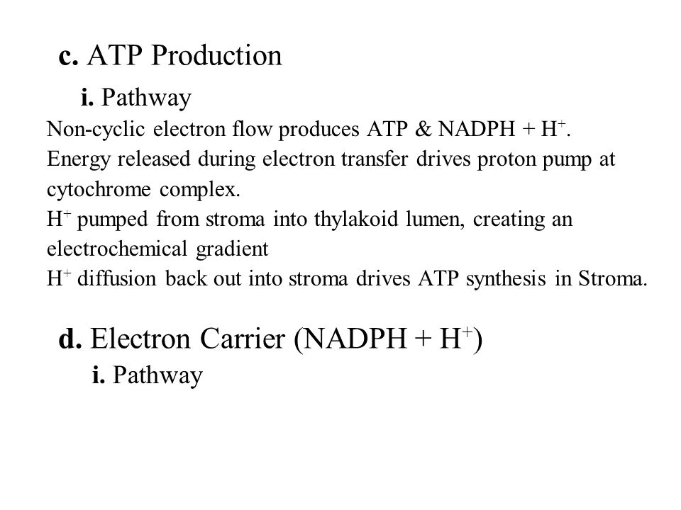 i. Pathway Non-cyclic electron flow produces ATP & NADPH + H +.