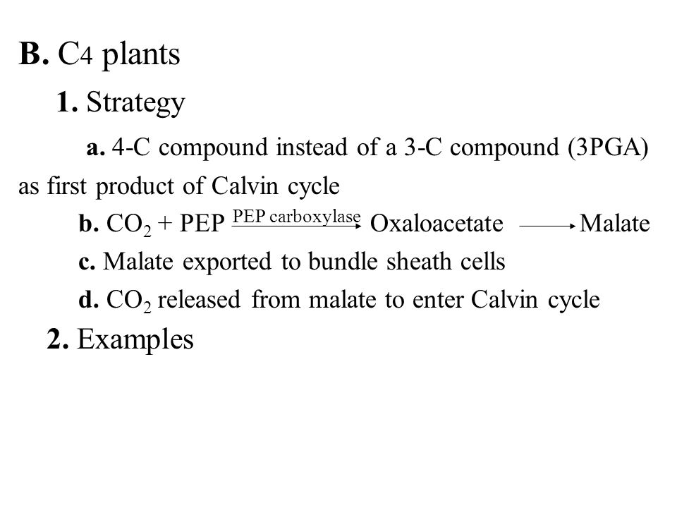 B. C 4 plants 1. Strategy a. 4-C compound instead of a 3-C compound (3PGA) as first product of Calvin cycle b. CO 2 + PEP Oxaloacetate Malate c. Malat
