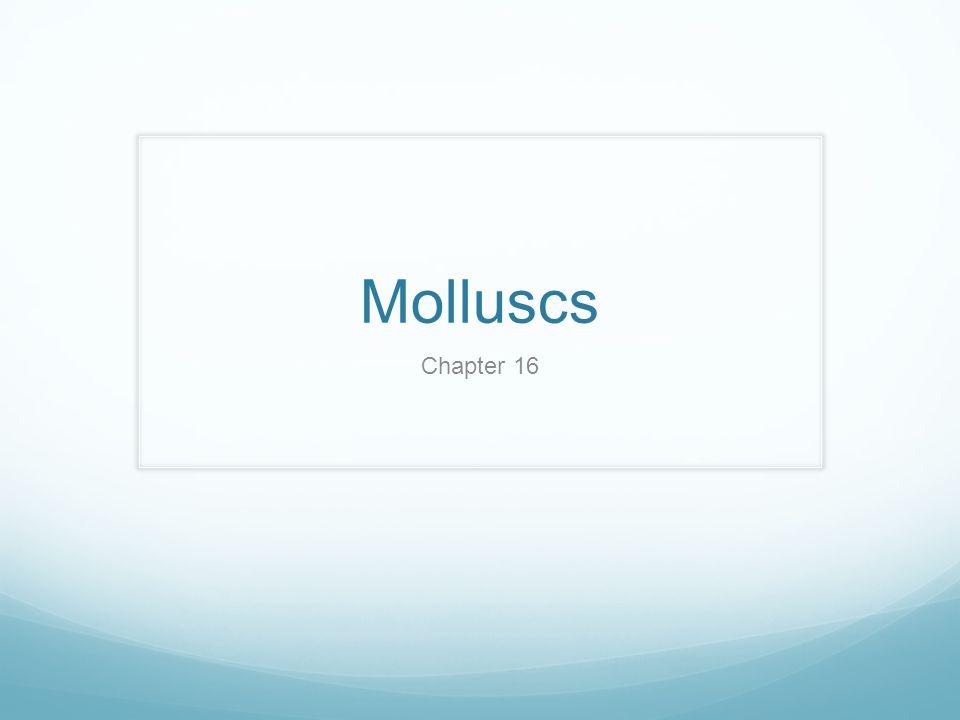 Molluscs Chapter 16