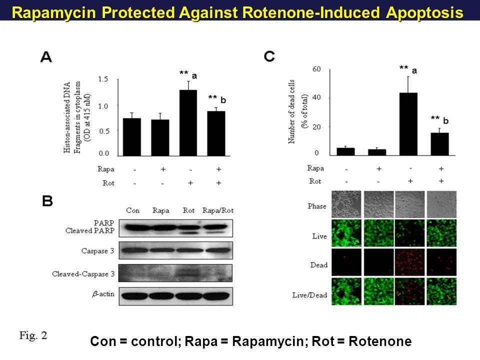 Rapamycin Protected Against Rotenone-Induced Apoptosis Con = control; Rapa = Rapamycin; Rot = Rotenone