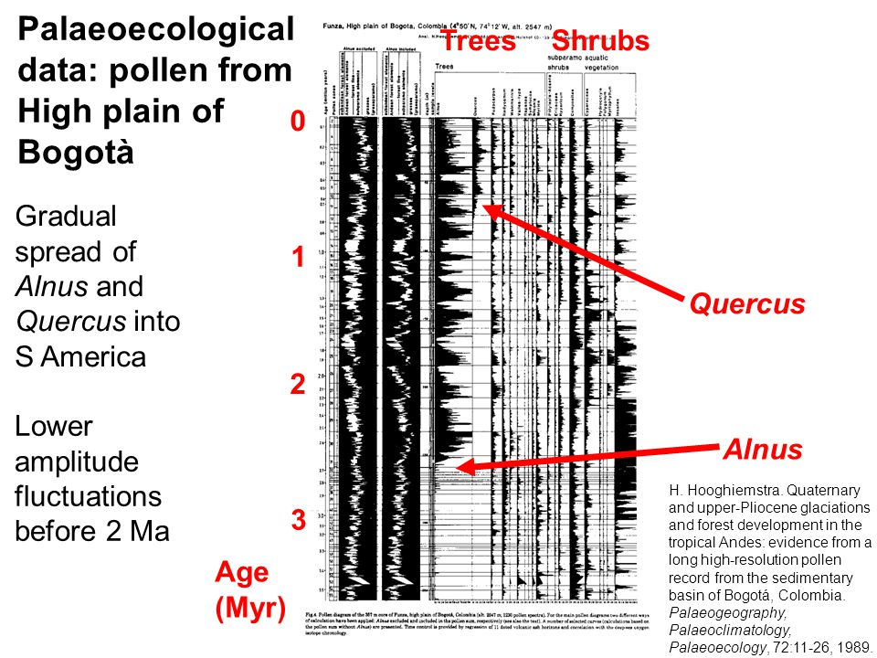Age (Myr) 1 2 3 0 Alnus Quercus TreesShrubs Gradual spread of Alnus and Quercus into S America Lower amplitude fluctuations before 2 Ma Palaeoecological data: pollen from High plain of Bogotà H.