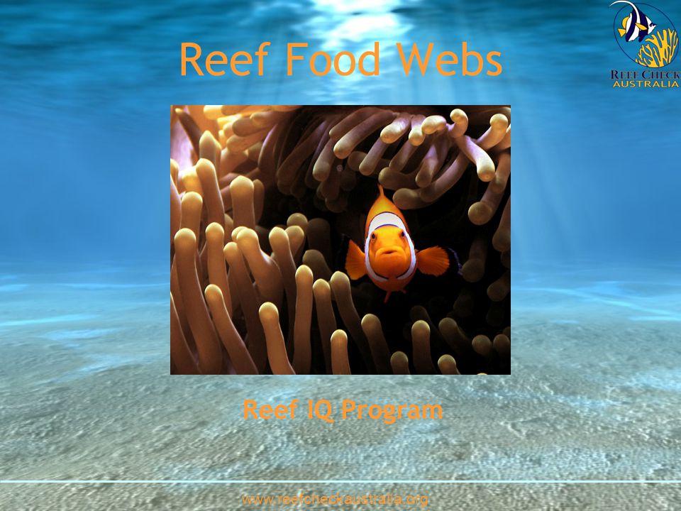 Coral and zooxanthellae Algae Plankton www.reefcheckaustralia.org ParrotfishDamselfish Coral Trout.
