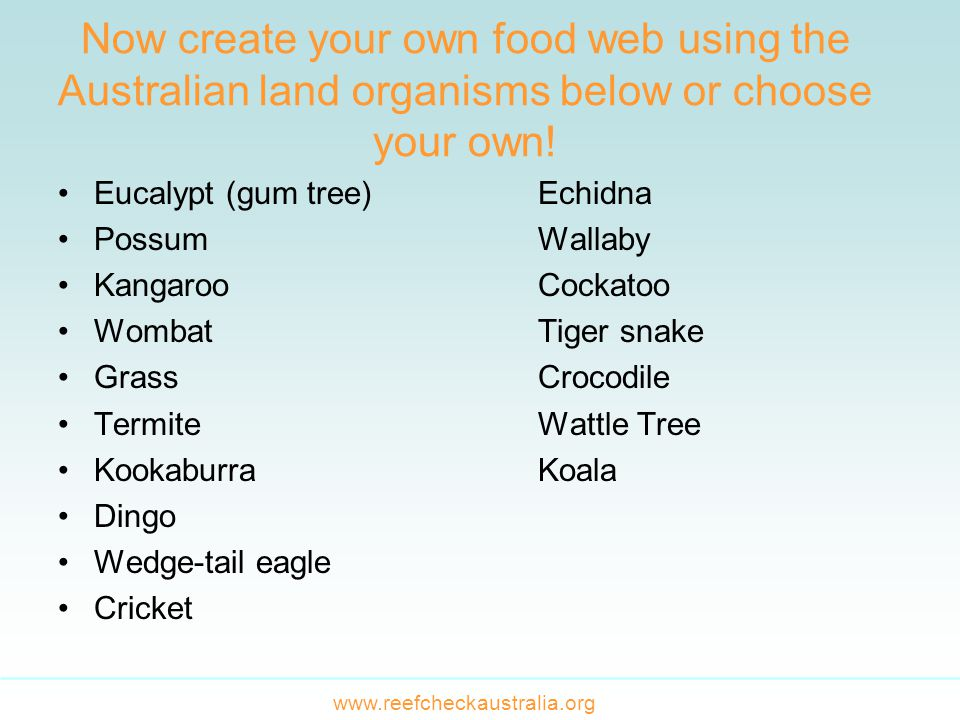 Now create your own food web using the Australian land organisms below or choose your own.