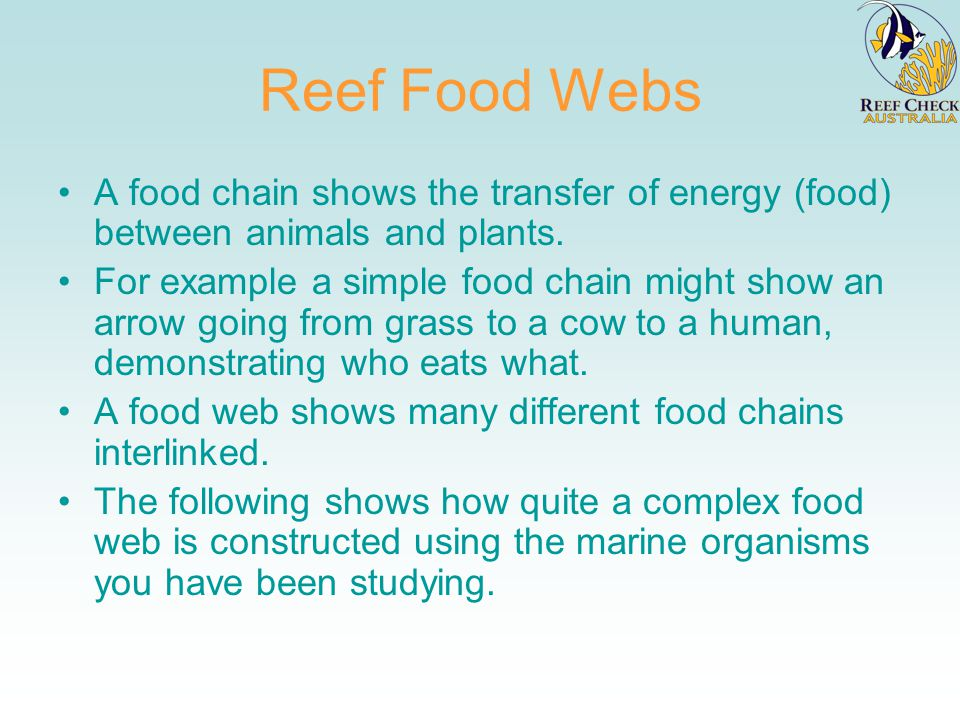 Reef Food Webs A food chain shows the transfer of energy (food) between animals and plants.
