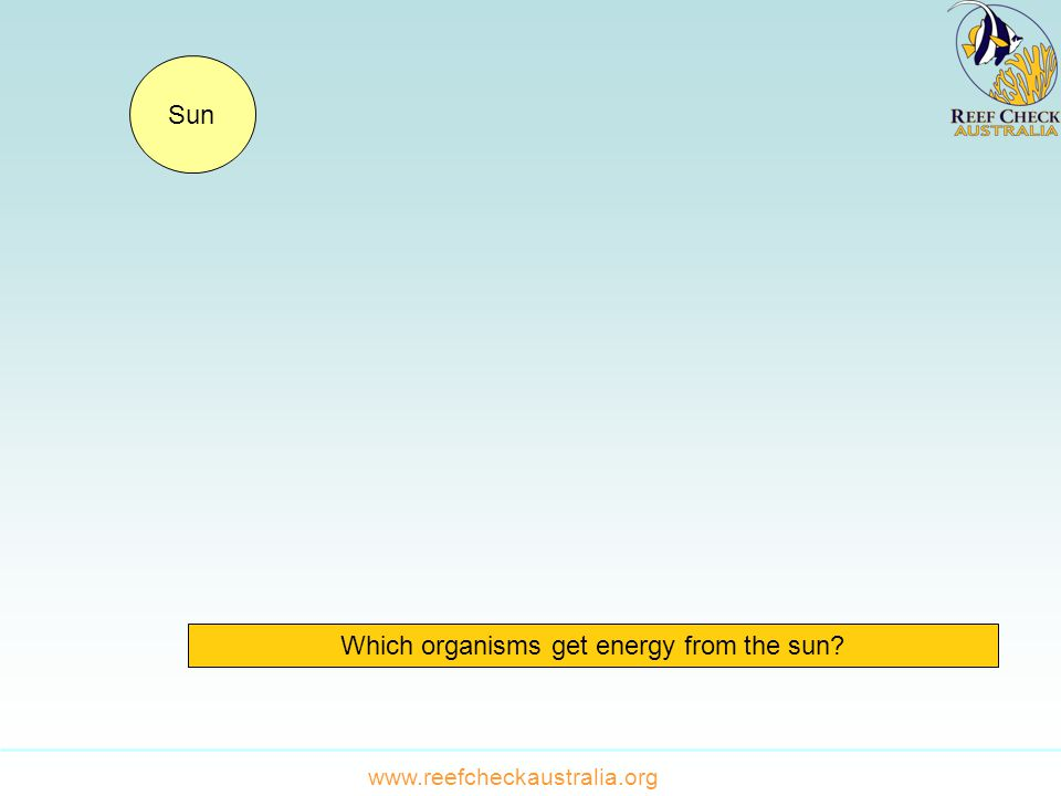 Which organisms get energy from the sun Sun