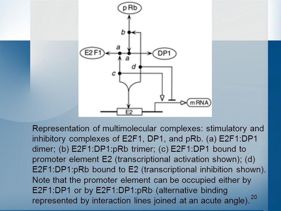 20 Representation of multimolecular complexes: stimulatory and inhibitory complexes of E2F1, DP1, and pRb. (a) E2F1:DP1 dimer; (b) E2F1:DP1:pRb trimer
