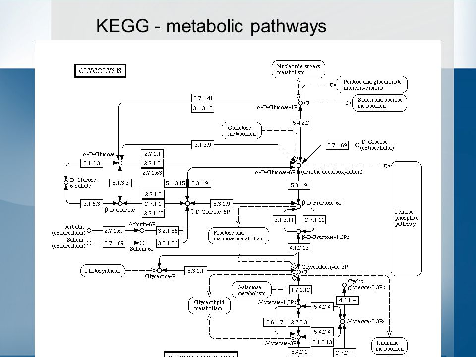 32 KEGG - metabolic pathways