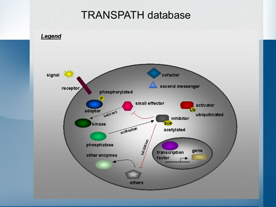 36 TRANSPATH database