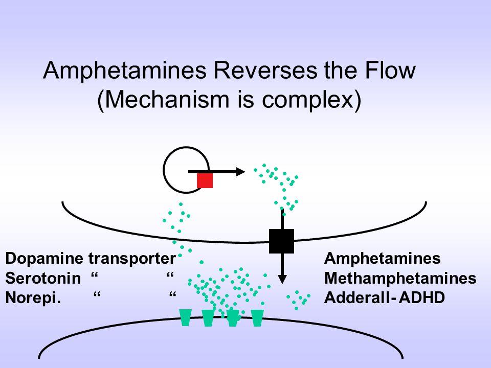 Dopamine transporter Serotonin Norepi. Amphetamines Reverses the Flow (Mechanism is complex) Amphetamines Methamphetamines Adderall- ADHD