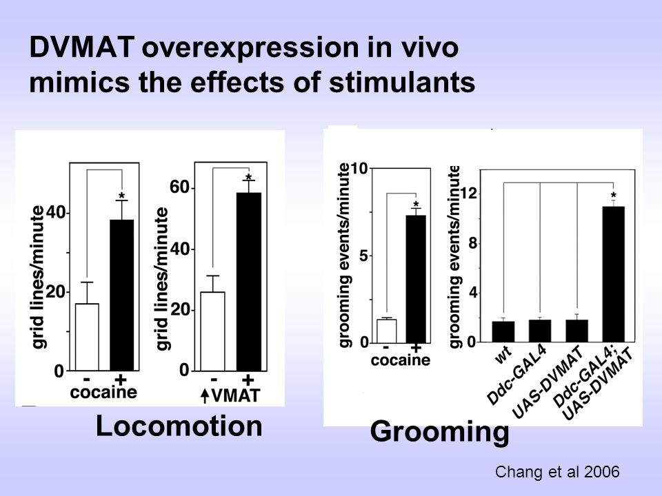 DVMAT overexpression in vivo mimics the effects of stimulants Locomotion Grooming Chang et al 2006