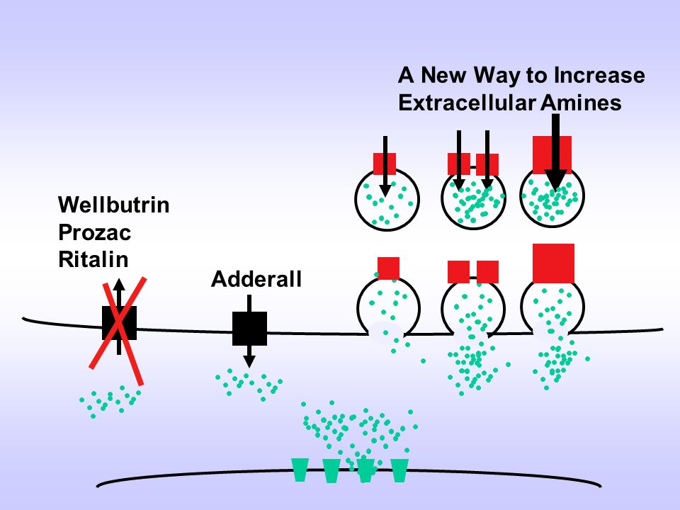 A New Way to Increase Extracellular Amines Wellbutrin Prozac Ritalin Adderall