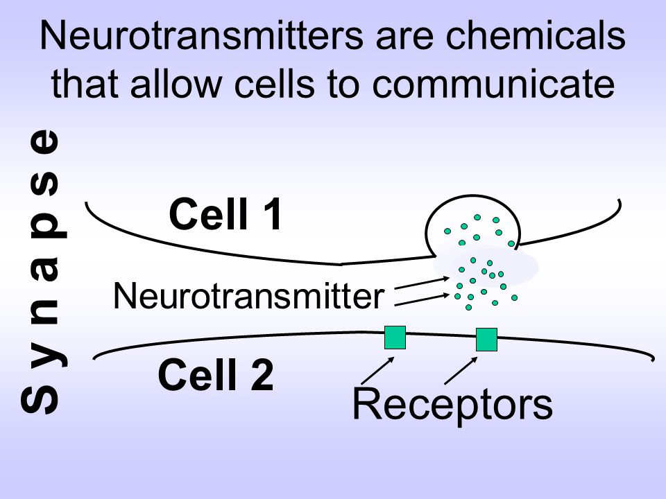 Cell 2 Neurotransmitters are chemicals that allow cells to communicate Cell 1 Receptors S y n a p s e Neurotransmitter