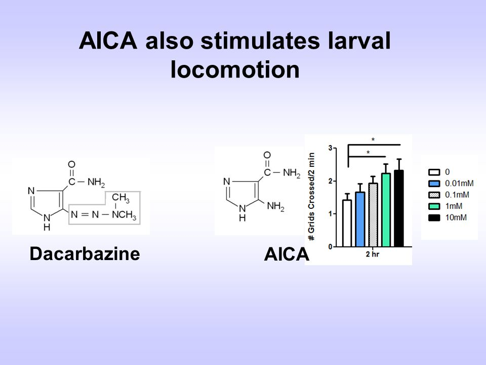 AICA also stimulates larval locomotion Dacarbazine AICA