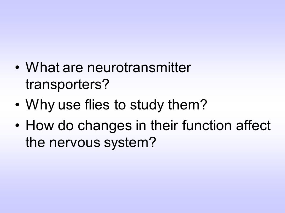 What are neurotransmitter transporters? Why use flies to study them? How do changes in their function affect the nervous system?