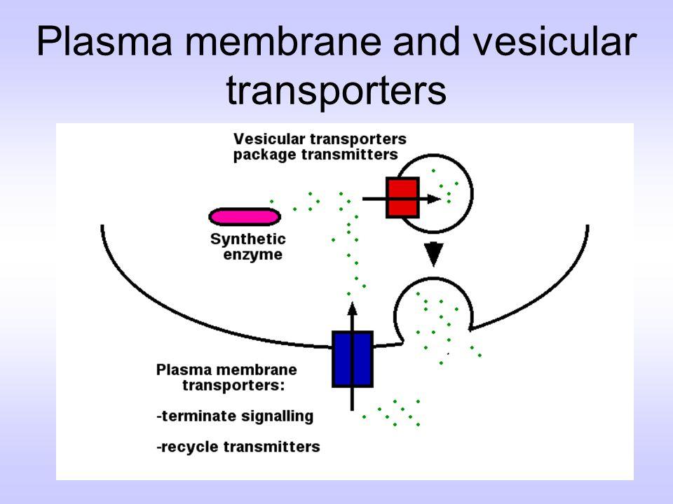 Plasma membrane and vesicular transporters