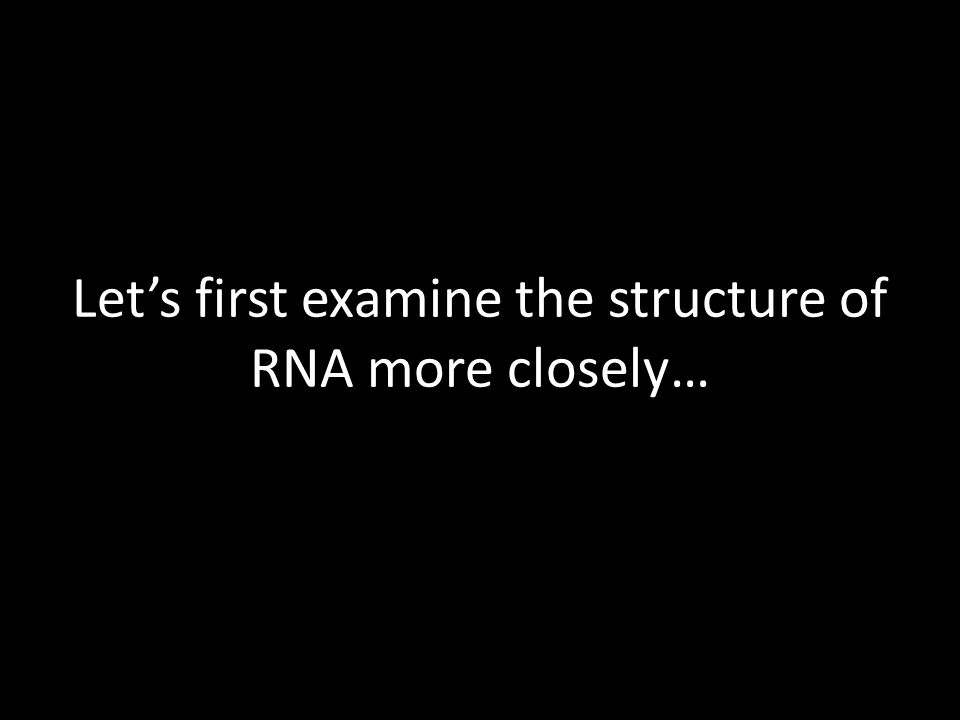 Lets first examine the structure of RNA more closely…