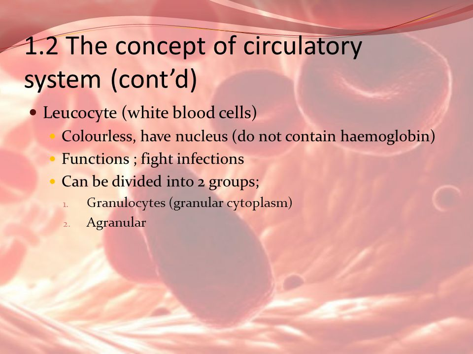 1.2 The concept of circulatory system (contd) Leucocyte (white blood cells) Colourless, have nucleus (do not contain haemoglobin) Functions ; fight in