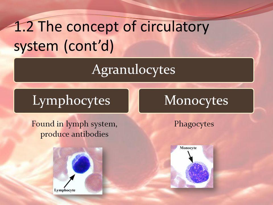 1.2 The concept of circulatory system (contd) AgranulocytesLymphocytesMonocytes Found in lymph system, produce antibodies Phagocytes