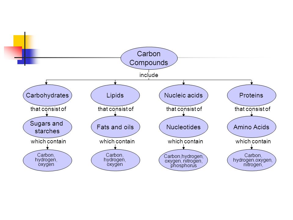 Carbon Compounds include that consist of which contain that consist of which contain Section 2-3 Concept Map CarbohydratesLipidsNucleic acidsProteins