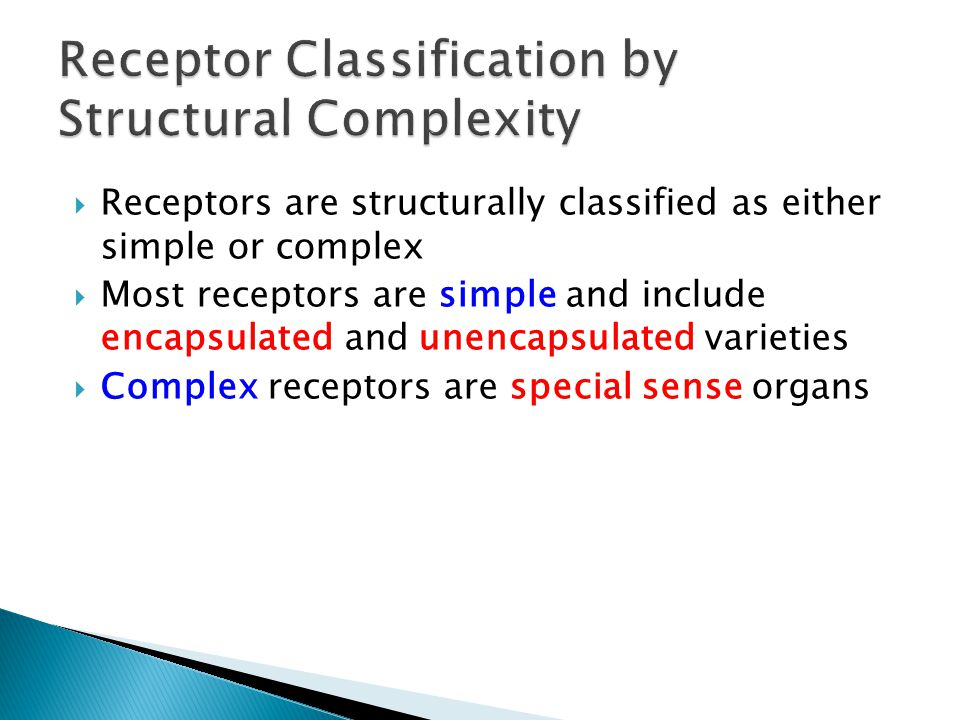 Receptors are structurally classified as either simple or complex Most receptors are simple and include encapsulated and unencapsulated varieties Comp