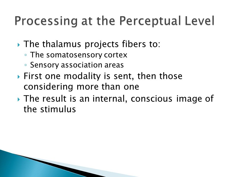 The thalamus projects fibers to: The somatosensory cortex Sensory association areas First one modality is sent, then those considering more than one T